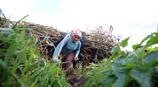 Doğu Karadeniz'in çalışkan kadınları