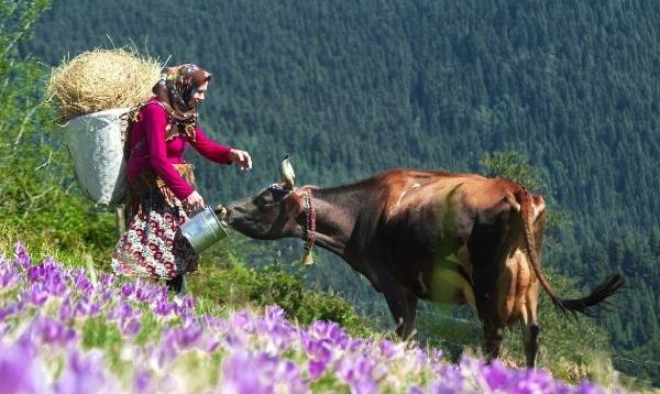 Tarım, hayvancılık ve sanayi projelerine destek